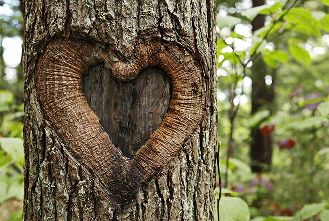 Baum mit Herz im Wald | Symbolbild | Oberhof Hotel Urlaub im Thüringenschanze
