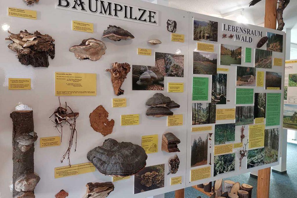 Ausstellung-Biosphärenreservat Vessertal-Thüringer Wald