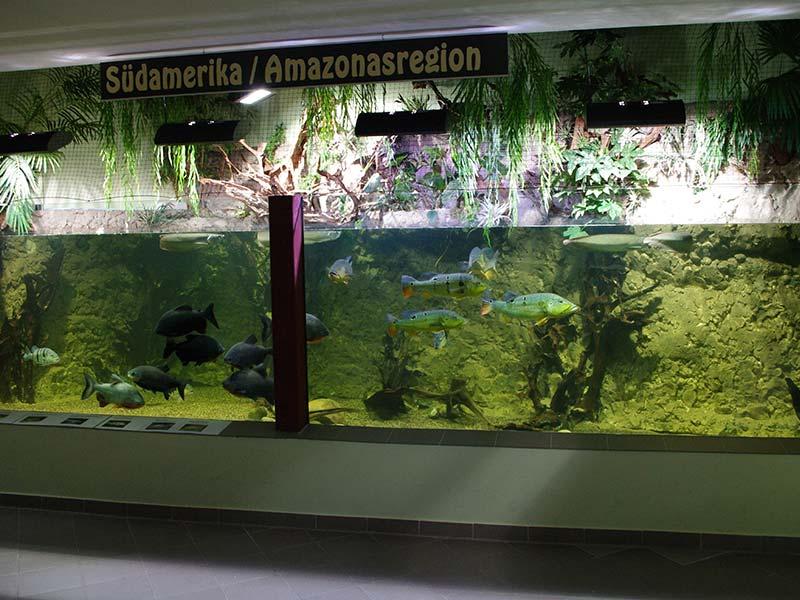Amazonasbecken Exotarium Oberhof   Ausflugstipp Oberhof