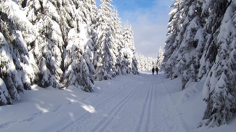 Loipe im Winter, Ferienregion Oberhof | Winterurlaub Oberhof