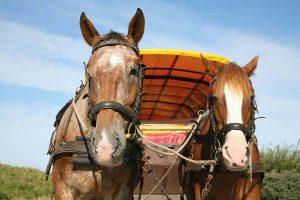 Pferde Planwagen | Oberhof Hotel Urlaub im Thüringenschanze