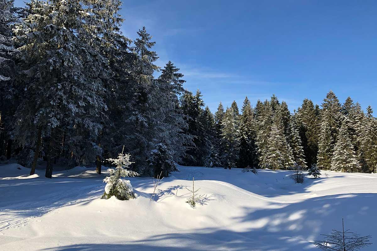 Schützenbergmorr bei Oberhof | Ausflugstipp Hotel Oberhof