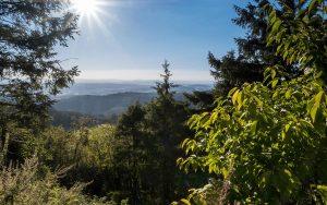Thüringer Wald Urlaub im Sommer | Oberhof Hotel Urlaub im Thüringenschanze