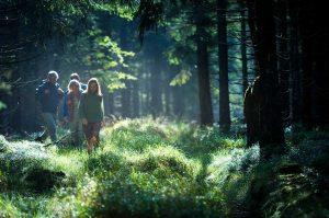 Wandern im Thüringer Wald | Oberhof Hotel Urlaub im Thüringenschanze