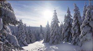 Winterlandschaft am Rennsteig | Hotel in Oberhof buchen